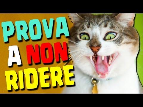 PROVA A NON RIDERE CHALLENGE CON GLI ANIMALI!!