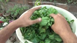 How to Compost Leaves Quickly | What to Put Into a Compost Bin | Composting in Winter (Urdu/hindi)