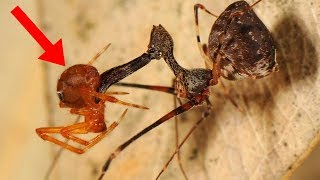 9 Most RECENTLY Discovered Insects!