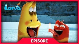 LARVA - FLARE | Cartoon Movie | Cartoons For Children | Larva Cartoon | LARVA Official