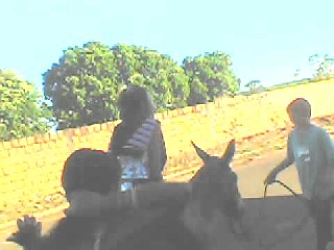 babuinas do jegue