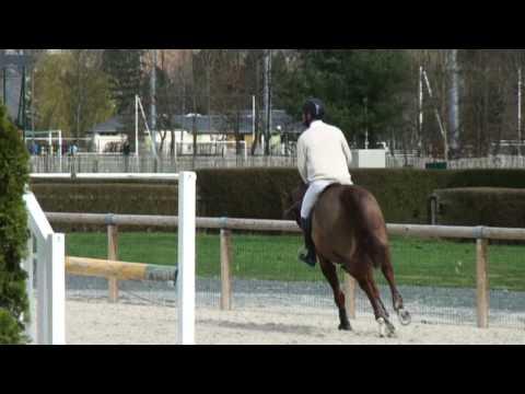 ♥ Quali de la Roque- jumping horse  by Limbo