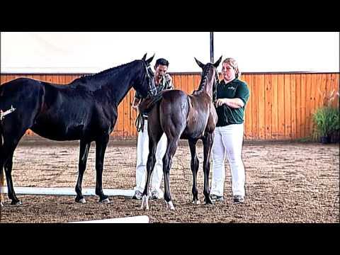 Xxx Mp4 Akinori Charlotte S Creek Farm Hilltop Oldenburg Horse Breeders Society Inspection 3gp Sex