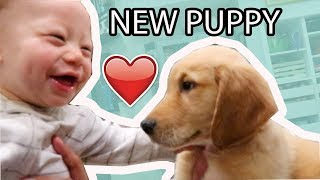 Baby's Reaction  to New Puppy! 😍