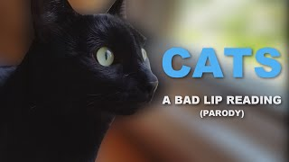 "[PARODY] ""CATS"" — A Bad Lip Reading"