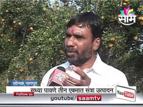 Xxx Mp4 Ajaykumar Pawade 39 S Natural Zero Budget Orange Farming Success Story 3gp Sex