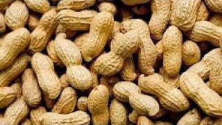मूंगफली खाने वाले जरा रुकिए जानिए इसे खाने से क्या होता है आपके शरीर में