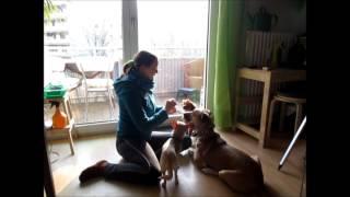 Hund Tutorial - Sitz dem Hund beibringen - Die schnuckeligen Drei