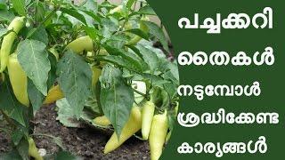 പച്ചക്കറി തൈകള് നടുമ്പോള് ശ്രദ്ധിക്കേണ്ട കാര്യങ്ങൾ Adukkalathottam Krishi Tips