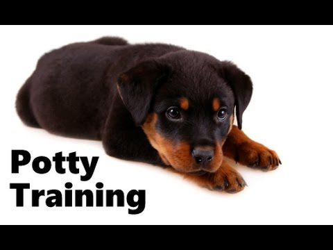 How To Potty Train A Rottweiler Puppy - Rottweiler House Training - Housebreaking Rottweiler Puppies