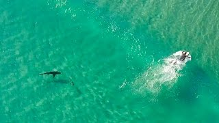 Sharks Approach Surfers!! | DJI Mavic Pro | Incredible 4K Drone Footage | Fort Pierce Inlet