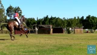Wendy Schaeffer riding SUN SHOWERS 122 CCI 3 Star Sydney International Horse Trials 2013