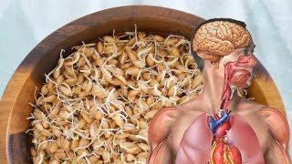 حبة صغيرة جدا مليئة بالدواء تعالج 70% من الأمراض بإذن الله.. ستندهش من الفوائد !