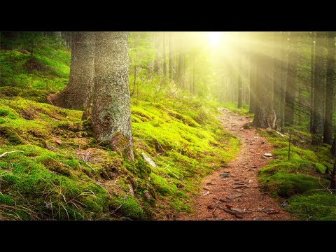 Xxx Mp4 Relaxing Music Beautiful Nature Soothing Music For Meditation Yoga Stress Relief 3gp Sex