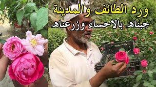 ورد الطايف والمدينة جبناه الاحساء وزرعناه | سناب الاحساء