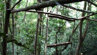 Vivendo nas árvores (construindo casa na árvore, plataforma) parte 3