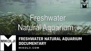 Freshwater Natural Aquarium Documentary