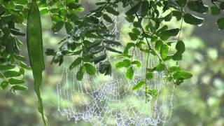 Shillong Cherrapunjee or Sohra Mawlynnong - Meghalaya - Halfway to Heaven - Incredible India