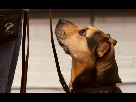How to Teach Your Dog to Heel | Dog Training