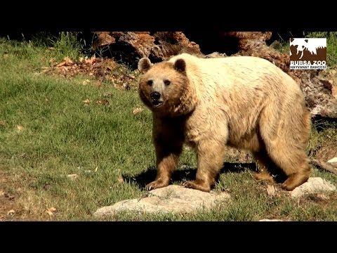 Bursa Zoo | Bursa Hayvanat Bahçesi