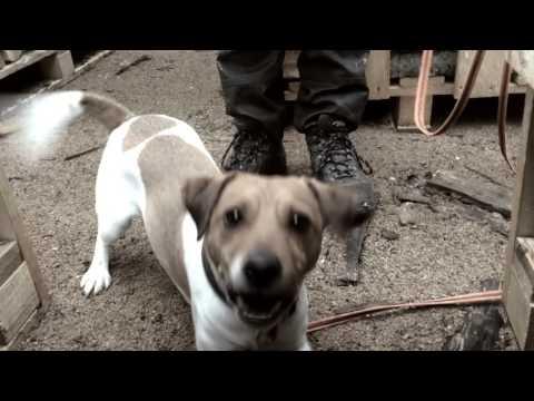 Oui and Barkley Rescue Search