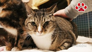 みけとみみ【瀬戸のみみ日記】Cute cat Mi ke and Mimi
