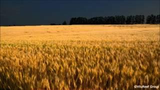 【作業用BGM】虫の声(夏夜)60 min/Sound of insects