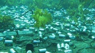 Newfoundland's underwater trash problem
