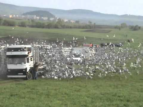 Lansare Prahova FCPR 20.000 porumbei