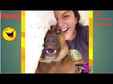 Vidio Anjing Jilat Itunya Majikannya Mantap Banget!! Funny Animal Best Ever 2017