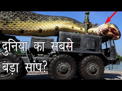 Xxx Mp4 दुनिया का सबसे बड़ा साँप Largest Snake In The World Hoax Or Real Hoax Hunting Episode 2 3gp Sex