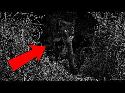 7 Believed Extinct Animals Still Alive