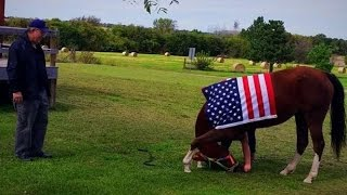 14-Year-Old Girl Teaches Her Horse To Bow For Veterans