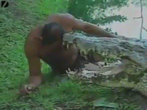 Ataques de Animais Cenas Fortes Animales Hombres Divulga Tudo
