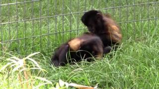 Romance at Jungle Friends