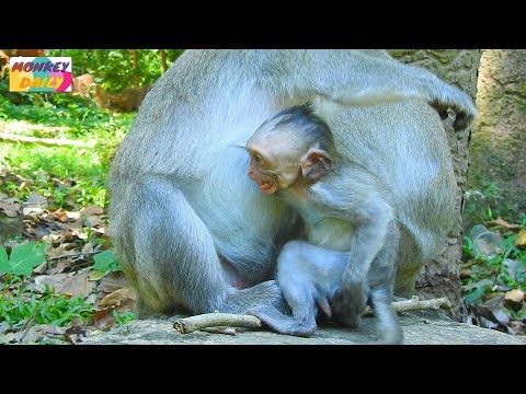 Xxx Mp4 Jade Mom Pity Micah Baby Let Her Milk But Baby Cry Loudly After Mom Stop Her Milk Monkey Daily 840 3gp Sex