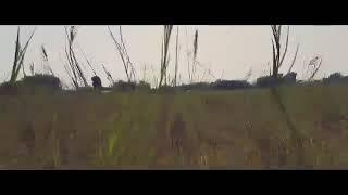 فيديو كليب 2018