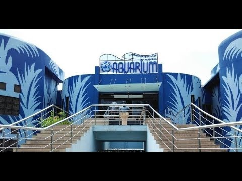Xxx Mp4 Aquarium Surat 2016 3gp Sex
