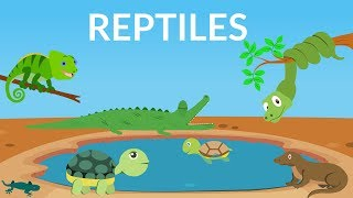 Learn about Reptiles    Reptiles Video for Kids
