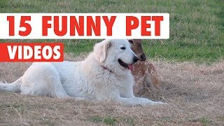 15 Funny Pets | Awesome Pet Video Compilation 2017