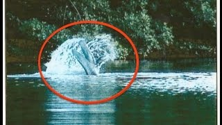 TRIDENT TAIL LAKE MONSTER, FLORIDA | Footage Reviewed