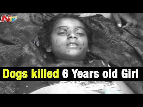 Xxx Mp4 Dogs Killed Six Years Old Girl In Guntur District NTV 3gp Sex