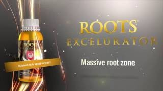 Root Excelurator by House and Garden