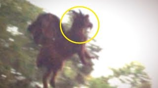 5 Most Mysterious Creatures Caught in America!