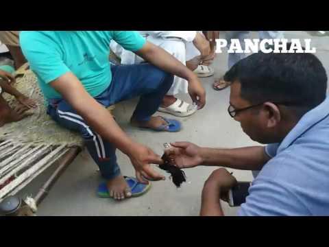 Xxx Mp4 Kalinga Chotti Kand Sonu Panchal Kalinga 3gp Sex