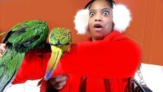 SHE'S DEFINITELY NOT FEELING THE NEW PET BIRDS!!! | VLOGMAS DAY 7