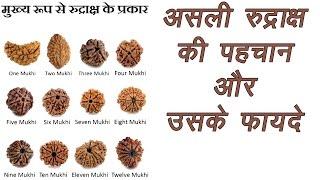 Rudraksh | किस रुद्राक्ष का क्या है फायदा और कैसे पहचाने ? | Types of Rudraksha | Mano Ya Na Mano