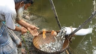 Believe This Fishing? Unique Fish Trapping System | New Technique Of Catching Country Fish