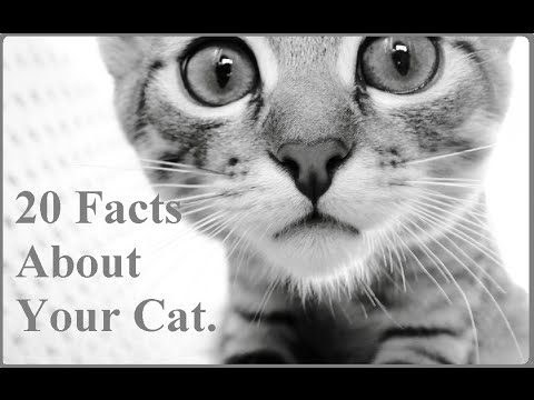 20 Facts About Your Cat -