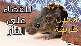 بهذه الطريقة امنع الفأر  نهائي من دخول بيتك - اسرع طريقة لقضاء على الفئران - الطعام المفضل للفئران